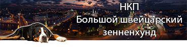 Сайт НКП Большой швейцарский зенненхунд